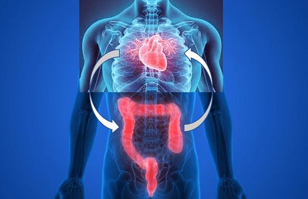 batterio intestinale causa infarto
